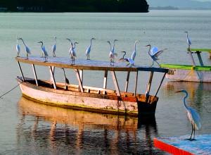 Barra de Coyuca