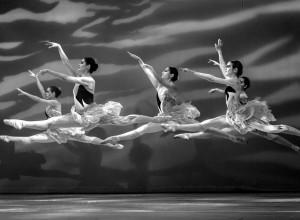 El vuelo de los cisnes