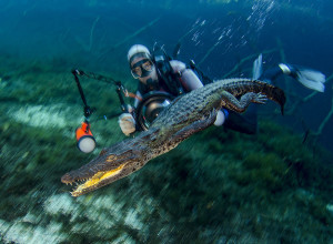 Fotógrafo submarino. Primer lugar, Naturaleza y Ser Humano.