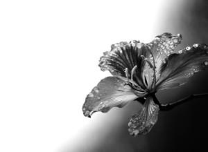 Flor silvestre. Ganador, Flora y Hongos. Categoría Jóvenes.