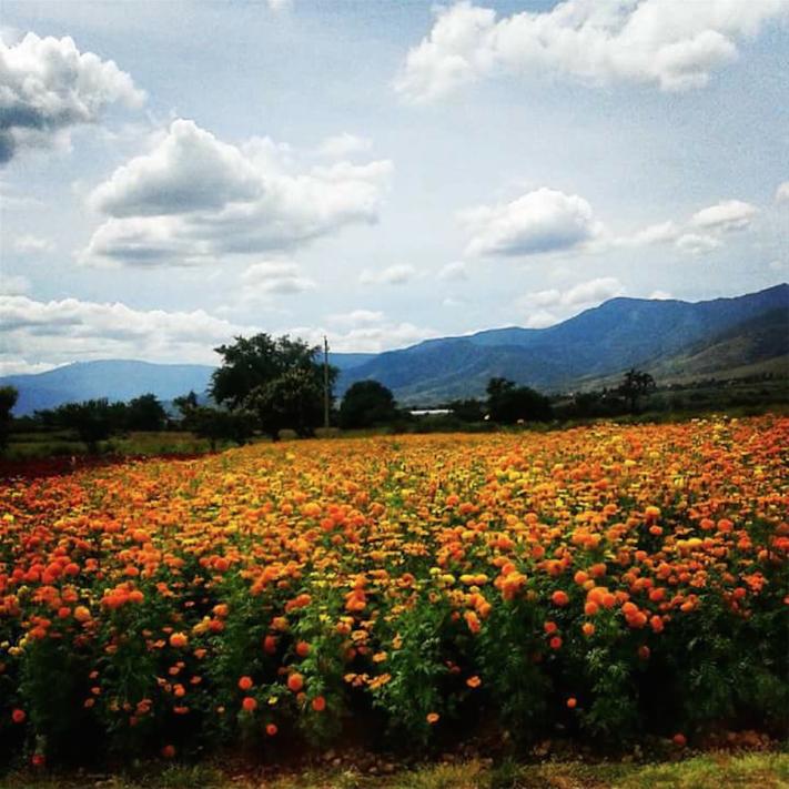 Tlalixtac de Cabrera, Oaxaca © Alain Martínez