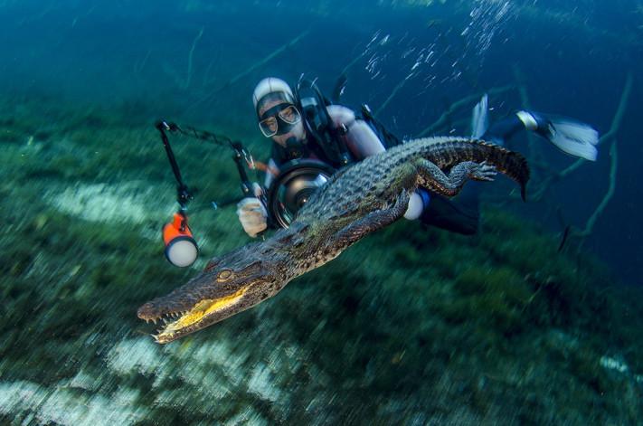 uw photographer and moreletti crocodile