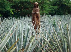 La Virgen de los agaves