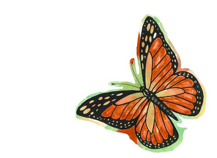 mariposa monarca_1024