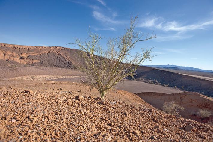 paisaje del Pinacate