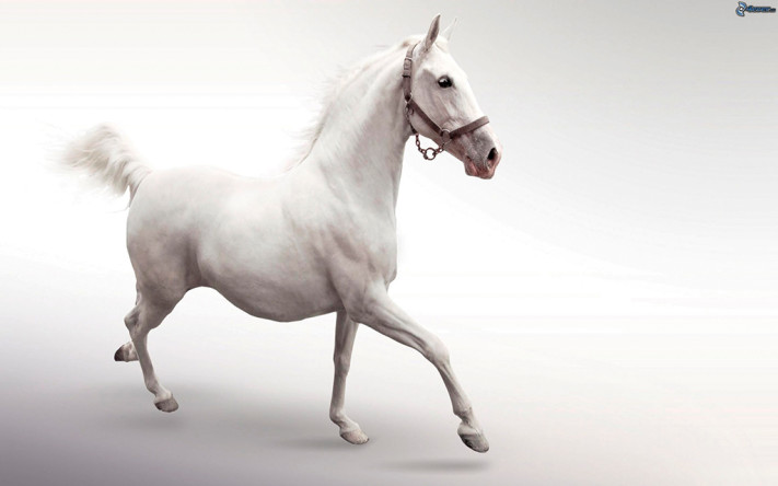caballo blanco 169413
