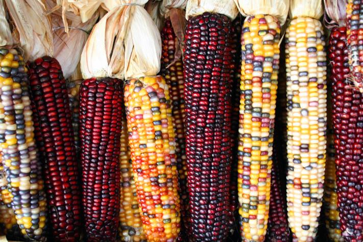 maíces