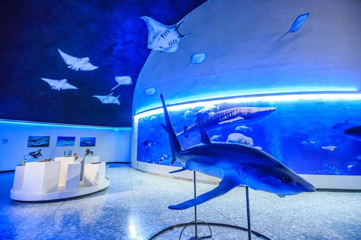 Tiburones mantas ya rayas