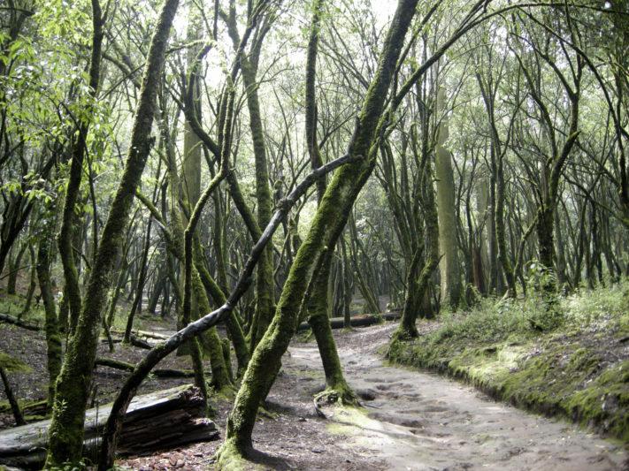 Bosque_del_Desierto_de_los_Leones