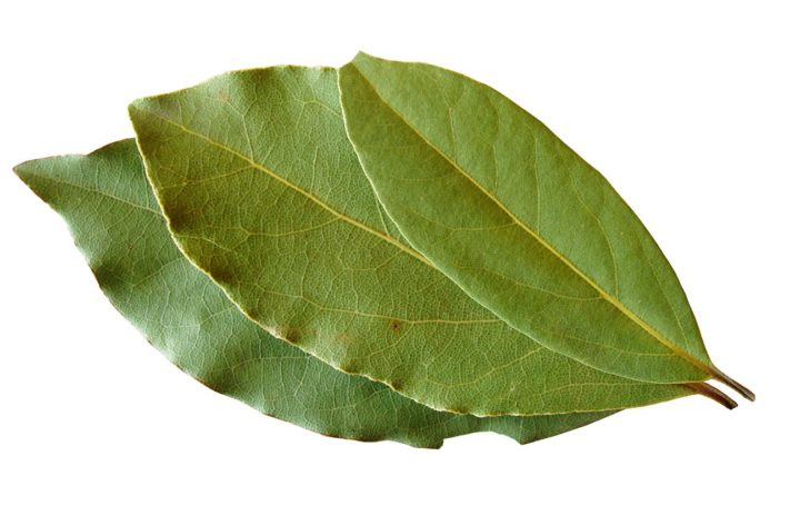 Laurel-Bay-Leaves